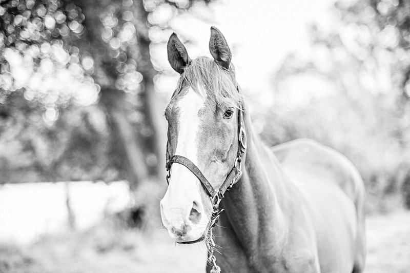 Copyright Stables Photography